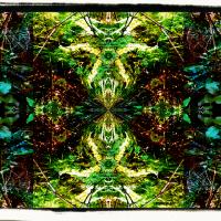 Deep Forest fractals