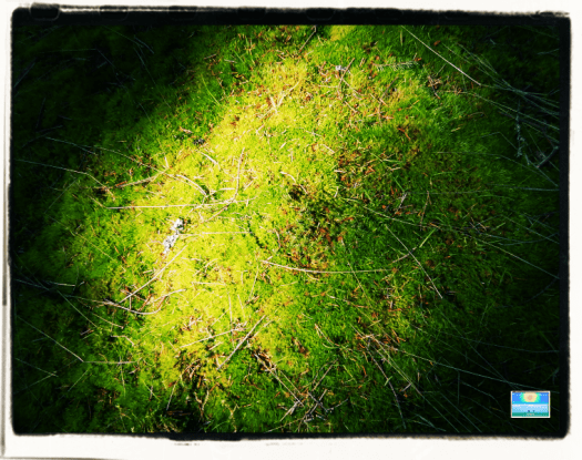 Spring forest moss