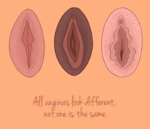 Iedereen steekt wat op in het vaginamuseum