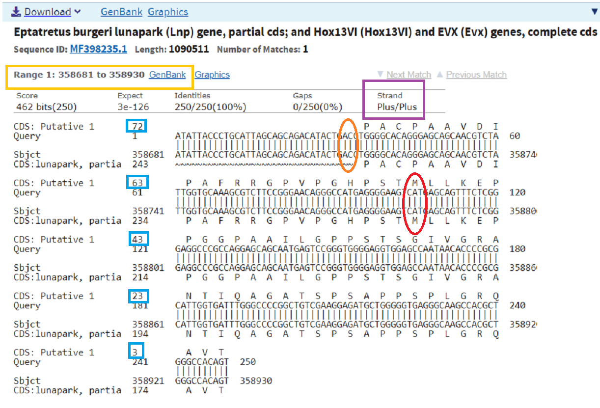 How do I use Nucleotide BLAST (blastn) with CDS feature display to determine the coding strand (plus or minus) on my sequences? · NLM Customer ...