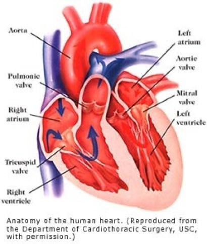 Image heart.jpg