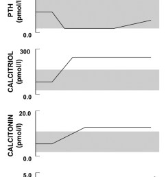 figure 2 schematic illustration of the longitudinal changes in calcium phosphate and [ 800 x 2684 Pixel ]