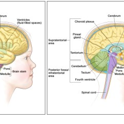 Lower Brain Diagram Typical Wiring For Drum Controller Figure Anatomy Of The Pdq Cancer Information Right Panel Shows Supratentorial Area Upper Part