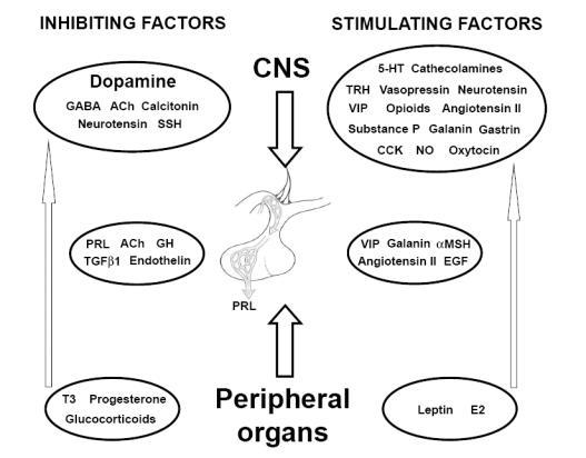 Hyperprolactin mie fertilit f minine et grossesse mov - Progesterone fausse couche ...