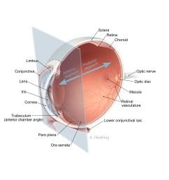 the gallery for gt ora serrata simple diagram of the eye eye diagram label [ 2700 x 2700 Pixel ]
