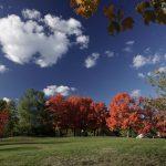 Fall Foliage in Chappaqua