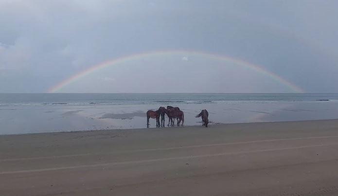 Wild Horses on Corolla Beach North Carolina