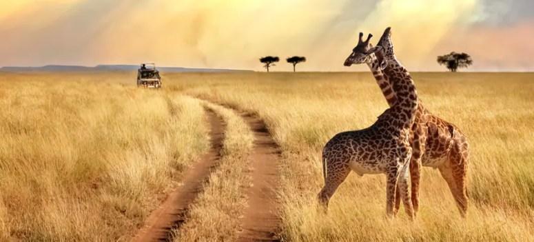 https://i0.wp.com/www.ncl.com/sites/default/files/881-African-Safari-Seychelles-DAWN21DBXABUPVINOSLUIPDGRICLIZMOSCPT_0.jpg?w=775&ssl=1