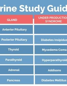 also endocrine system study guide nclex quiz rh nclexquiz