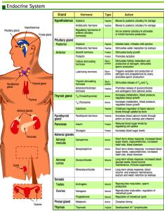 Endocrine system study guide also nclex quiz rh nclexquiz