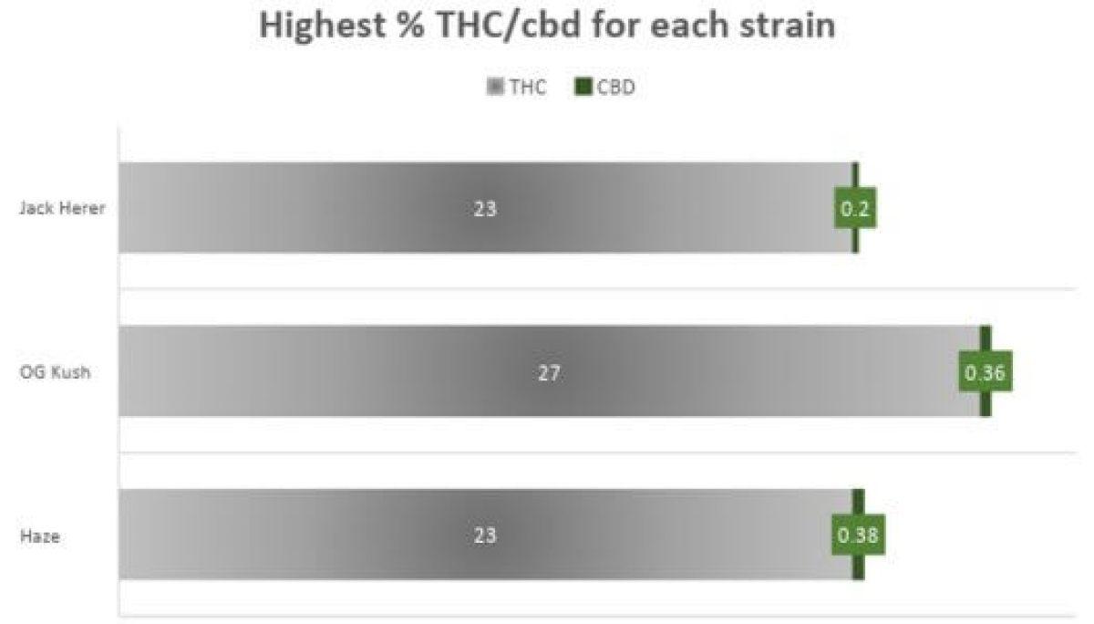 Cannabis Jack Herer Strain THC CBD