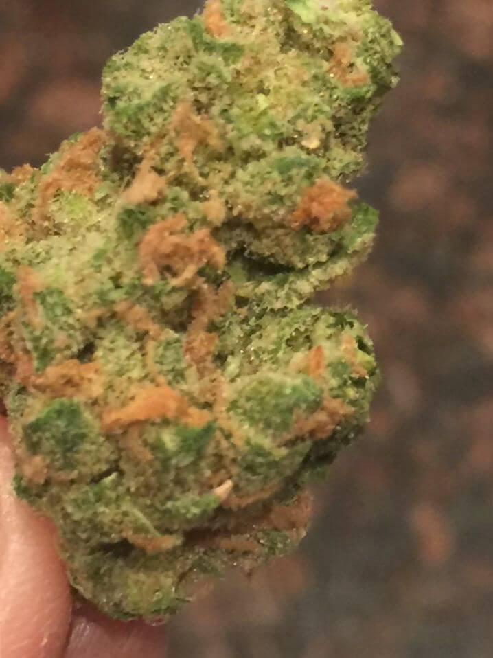 Marijuana Space Queen Strain Review - NCSM