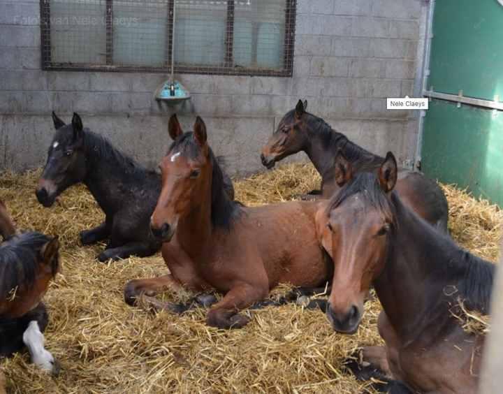Overzicht alle paarden