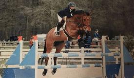 Verkochte paarden