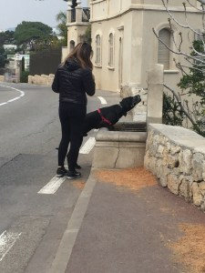Pup getting water out of a street-side fountain during his walk