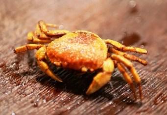 Fried mini-crab