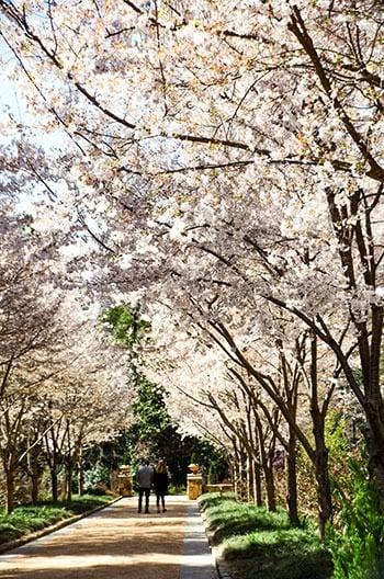 Botanical garden near me indoor. 15 Of The Most Beautiful Botanical Gardens In North Carolina