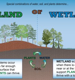 conceptual diagram wetland vs upland kg 02 north carolina wetlands diagram of constructed wetland conceptual diagram [ 3794 x 2054 Pixel ]