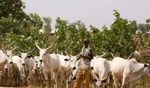 Why there will be crisis in Nigeria if Nigerian government insists on RUGA – Obule