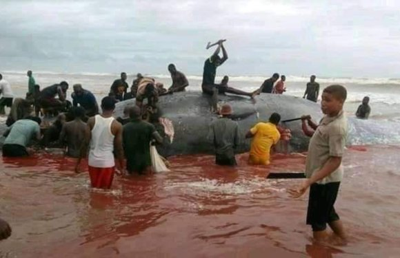 Bayelsa communities under epidemics threat for feasting on Whale – Okponipere
