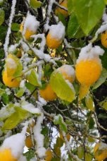 snow_in_ein_karem_02