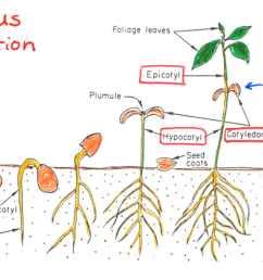 e germination [ 1224 x 697 Pixel ]