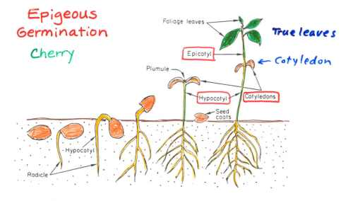 small resolution of e germination