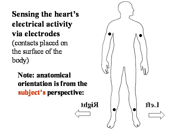 eHeart: Introduction to ECG EKG