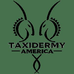 Taxidermy America