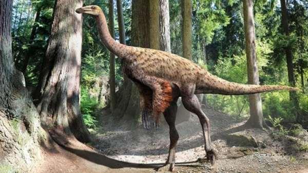 ornithomimus900