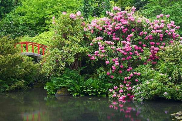 Wild: photo of the Moon Bridge in the Kubota Garden in Seattle.