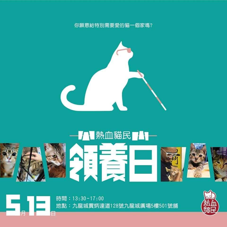 九龍城廣場: 熱血貓民領養日| 以成貓為主題的領養日| 貓咪領養日2018| NearSnake.com