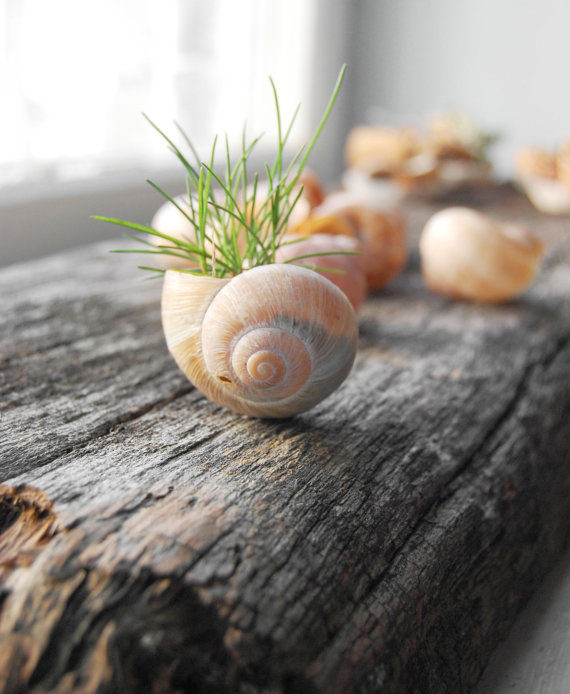 Snail-Shell-Flower-Planter