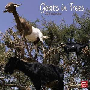 Goats in Trees Calendar  Neatorama