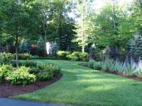 The Best Trees And Shrubs For A Natural Privacy Fence ...