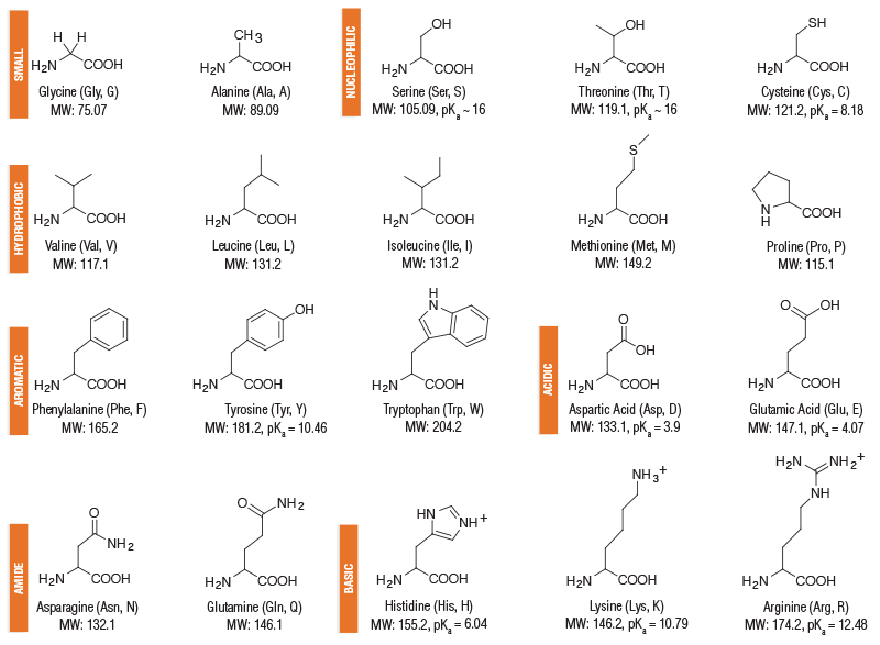 also amino acid structures neb rh