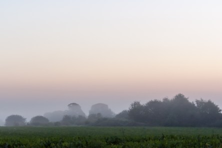 Fog over woods and meadows