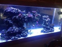 Aquarium Design, Aquarium Maintenance | Omaha, Irvington ...