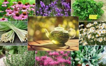 Bitki Çayları ve Sağlığa Faydaları