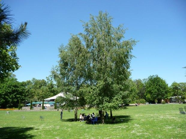 Sommer im Herzogenriedpark | Foto: Immanuel Giel