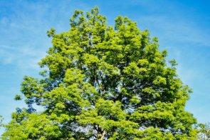 Eine Vielzahl an Laub- und Nadelbaumarten geben dem Friedrichspark, dank Herzogin Stephanie, sein charakteristisches Erscheinungsbild | Foto: Peter Derks