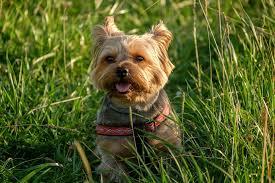 pet on grass