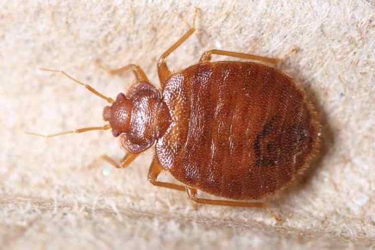 How To Get Rid Of Bed Bug Infestation