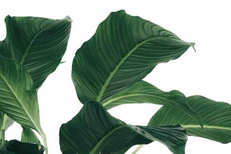 Some Of The Best Houseplants For The Bedroom