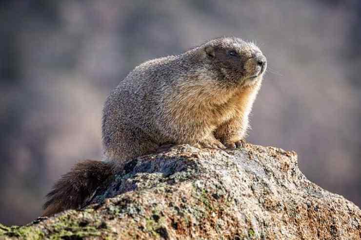 Groundhog Day Originated In Europe