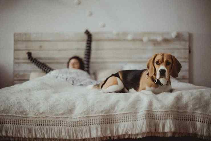 How Much Do Dog Sleep