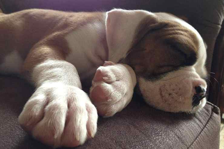 How To Improve Your Dogs Sleep
