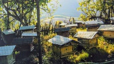 Photo of Bletaria e Dibrës