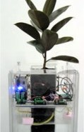 Spore Project: Home Depot stock-powered rubber tree plant