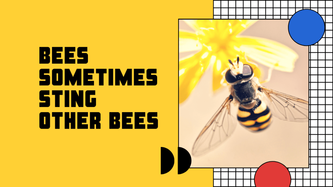 Bees Sometimes Sting Other Bees
